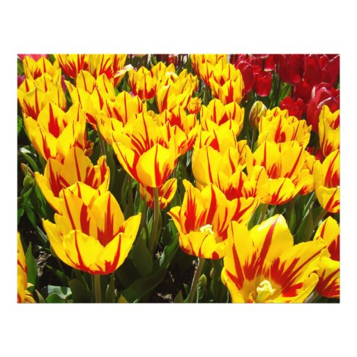 Flyer Paper Tulip Flowers Add Your Text Tulips