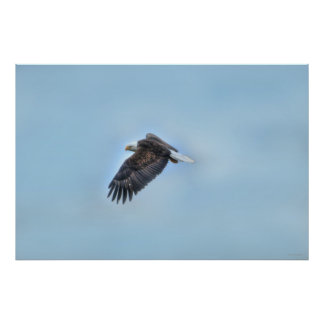 Flying Bald Eagle and Clouds Wildlife Photo Poster Print