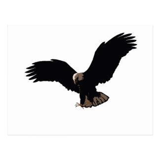 Flying Bald Eagle Post Card