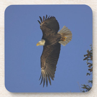 Flying Bald Eagle Wildlife-supporter Art Beverage Coaster