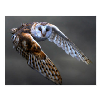 Flying Barn Owl Postcard