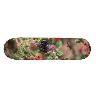 Flying Bumblebee Skate Board Decks