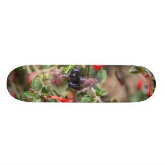 Flying Bumblebee Custom Skateboard