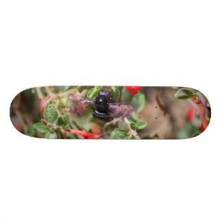 Flying Bumblebee Skate Board