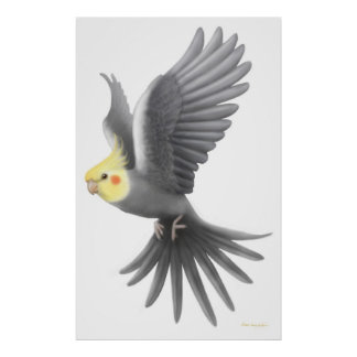 Flying Cockatiel Parrot Poster