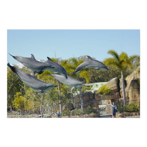 Flying Dolphins Poster