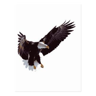 Flying Eagle Postcard