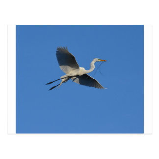 Flying Egret with Twig Postcard