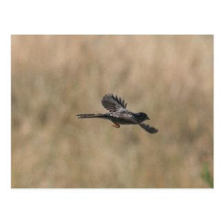 Flying Finch Postcard