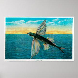 Flying Fish at Catalina Island Poster