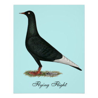 Flying Flight Black Pigeon Poster