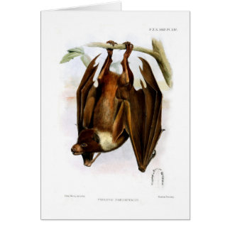 Flying fox card