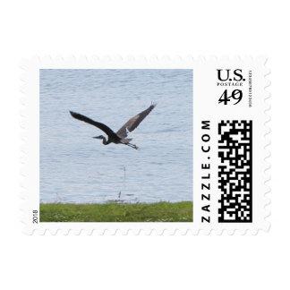 Flying Great Blue Heron Postage