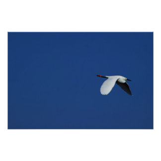 Flying Heron Poster