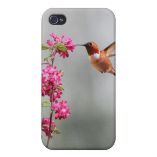 Flying Hummingbird and Flowers iPhone 4/4S Cases