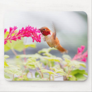 Flying Hummingbird and Flowers Mouse Pad