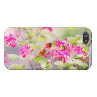 Flying Hummingbird and Red Currant Flowers iPhone 5/5S Case