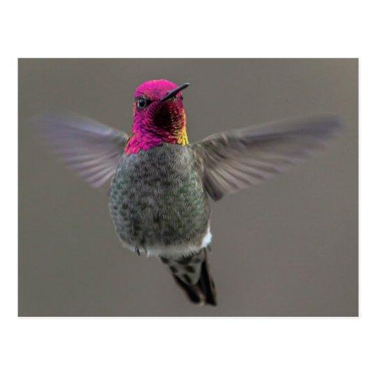 Flying Hummingbird Postcard