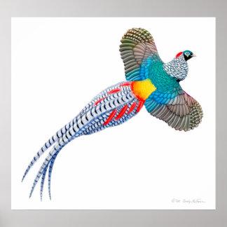 Flying Lady Amherst Pheasant Print