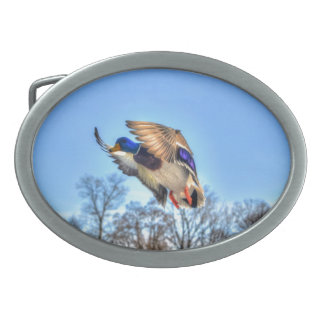Flying Mallard Duck Drake Wildlife Photo Oval Belt Buckles