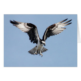 Flying Osprey Greeting Card