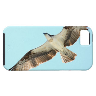 Flying Osprey Hawk iPhone 5 Case