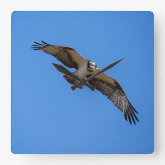 Flying osprey with a target in sight wallclocks