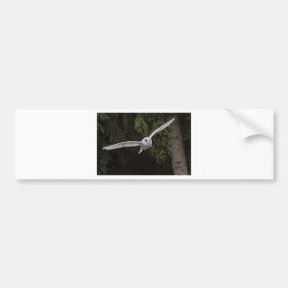 Flying owl bumper sticker
