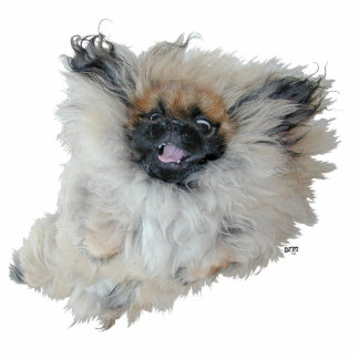 Flying Pekingese Standing Photo Sculpture