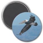 Flying Pelican Magnet 9