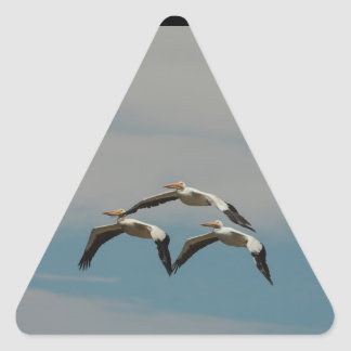Flying Pelican Sticker
