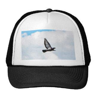 Flying Pigeon On Sky Cap