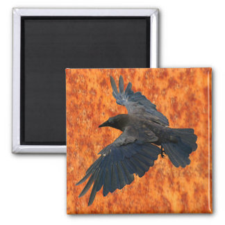 Flying Raven, Crow & Rustic Grunge Art Magnet