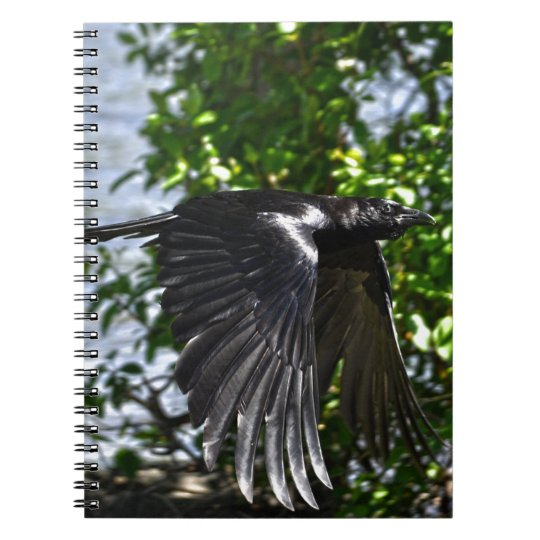 Flying Raven in Sunlight Wildlife Photo Spiral Notebook