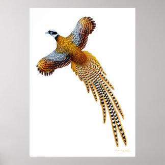Flying Reeves Pheasant Print