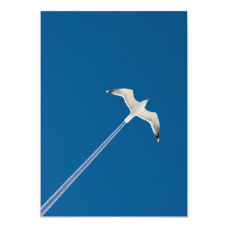 Flying seagull and the contrail card