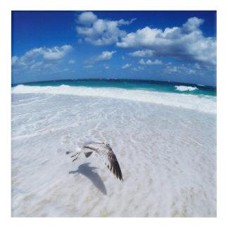 Flying Seagull At The Beach Acrylic Wall Art