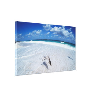 Flying Seagull On The Beach Canvas Print