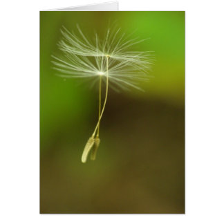 Flying seeds greeting card