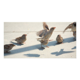 flying sparrows customized photo card