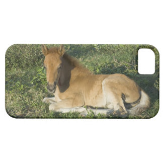 Foal (6) case for the iPhone 5