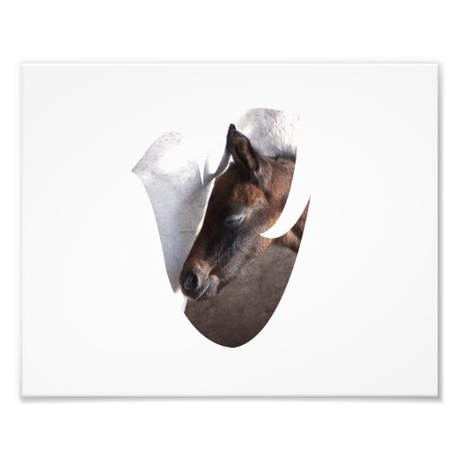 foal and mother dove shape art photo