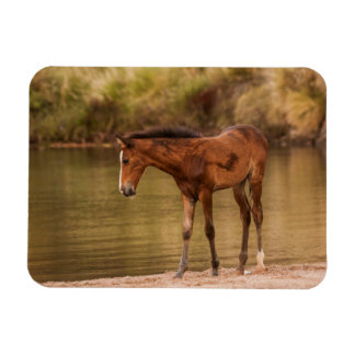 Foal at the river rectangular photo magnet