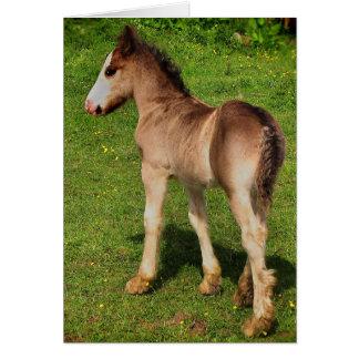 Foal Card