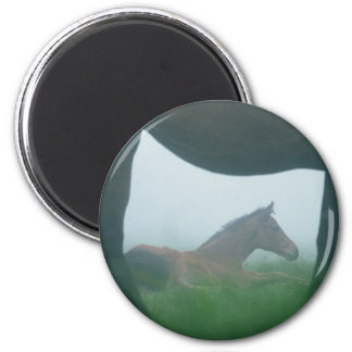 Foal Framed by its Mother Fridge Magnet