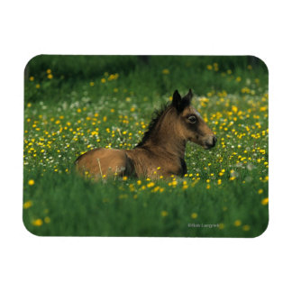 Foal Laying Down in Flowers Rectangular Photo Magnet