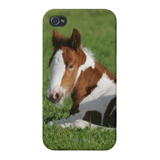 Foal Laying in Grass iPhone 4 Cover