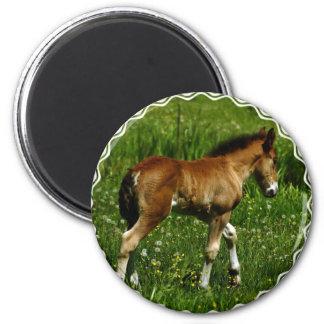 Foal Magnet Refrigerator Magnet