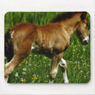Foal Mouse Pad