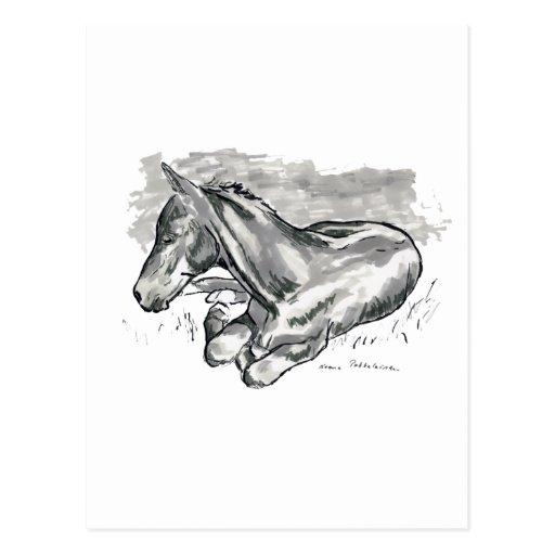 Foal Post Card
